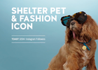 Ad Council's The Shelter Pet Project - Start A Story. Adopt.