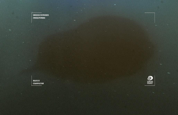 Eerie Sounds of Undiscovered Ocean Life Highlight Cost of Pollution