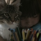 Cats' Curiosity Celebrated in This Lovely Whiskas Film