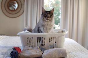Felines Drop Illuminating 'Catspiracies' in PetSafe's Self-Cleaning Litter Box Ads