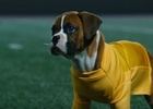 Pedigree's Adorable 'Pup-letes' Hit the Court in Latest Spots from BBDO NY