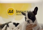 DDB NZ Uses Puppies and Grandma to Make Kiwis Care About AA Insurance