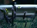 Fireflies Illuminate Range Rover SVA's Best Features