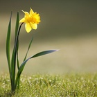 Radio LBB: Spring in Your Step