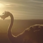 Ostrich Learns to Fly Through VR in Latest Samsung Campaign
