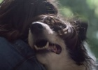 Dog Smells Its Way Home in Touching Air Freshener Ad