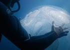 Sound of the Sea - Sea Shepherd