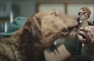 Rescue Dogs Find a Special Someone with Dogs Trust and Kitcatt Nohr