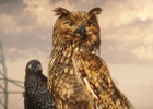 Stoned Birds and Flying Cats Hang Out in EnBW Ad