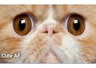 New App 'Dank' Makes Memes into Money for Advertisers