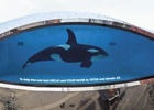 WCRS and Born Free Make a Splash with #TankFree for World Orca Day