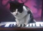 adam&eveDDB's Furtastic Temptations Music Video Takes Us Back to the '80s