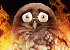 SuperbOwl Takes Flight During the Super Bowl to Aid Australian Wildlife