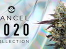 California's Premium Cannabis Brand Encourages You to Smoke Your Way to a Better 2021