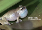 Behind the Work: How a Cute Puerto Rican Frog Sold 1.4m Cases of Beer