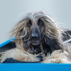 RSPCA Pet Insurance's New Spot Celebrates 'That RSPCA Feeling'
