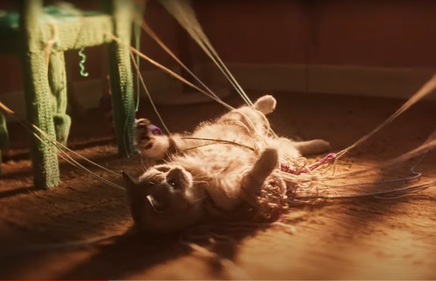 """Creating a """"Magical Cat Nirvana"""" Through Animal Psychology, Music and Filmmaking"""