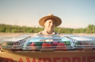 CCVFX & Director Martin Stirling Bring the Journey of a Strawberry to Life