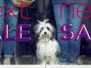Price Conscious Pooch Gets In on the Next Winter Sale in New Campaign