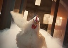 Badass Mother Clucker Struts Her Stuff to DMX in KFC Campaign