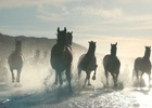 A Team of Horses Ride in Stunning Lloyds Film from adam&eveDDB