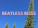 Radio LBB: Beatless Bliss