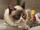 Grumpy Cat Gets the Buzz on Honey Nut Cheerios In Saatchi NY Spot
