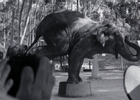 Heartbreaking Charity Film Calls out Animal Cruelty with Cutting-Edge CGI