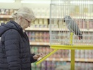 Y&R Prague Employs an African Grey Parrot as a Pet Insurance Salesman