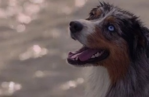 Pedigree shows how dogs can reduce stress as hearts align in new initiative via Clems Melbourne