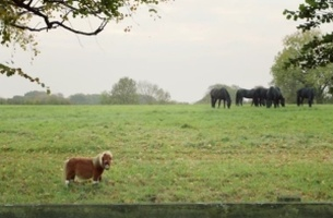 Adorable Amazon Prime Ad Stars the Tiniest Pony We've Ever Seen