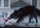 Pet Circle Encourages Aussie Pet Owners to 'Nourish Them' in New Spot
