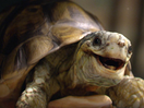 Gary the Tortoise Joyously Jumps into Spring For Homebase Campaign