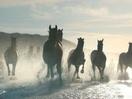 A Team of Horses Ride in Stunning Lloyds Film from adam&eveDDB