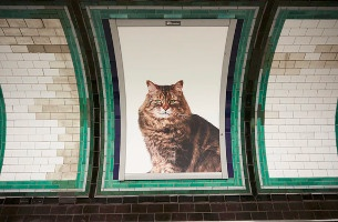 In London People Are Adblocking the Underground with Cat Pics – and it's Brilliant