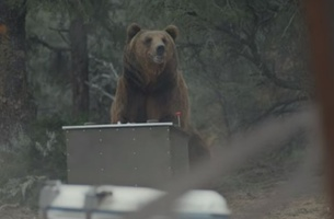 Can a Kodiak Bear Best an Otterbox Cooler? CP+B Boulder Finds Out