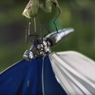 Mechanical Butterflies Brighten Up London in New Ford Spot