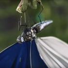 Mechanical Butterflies Brighten Up London in New Ford Spot