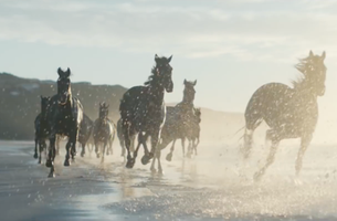 New British Lloyds Bank Film Stars Their Iconic Horses on Kiwi Shores