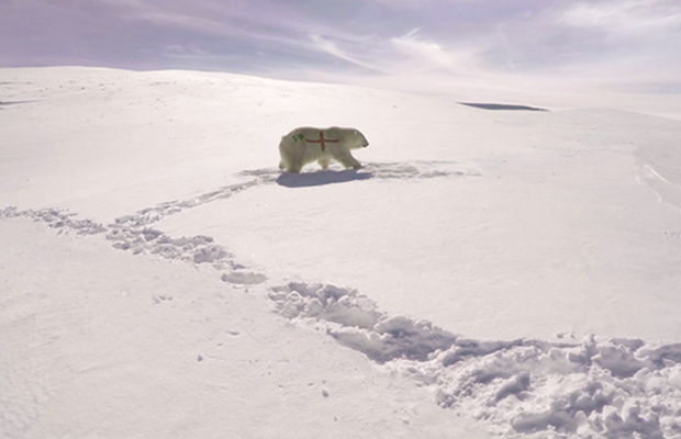 ENGLAND 'TIL I DYE: SNK Creates Fake Pawdio Mix for Paddy Power Polar Bear Stunt
