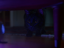 Curious Cat Takes on Home Smart Devices in HP+ Smart App Spot