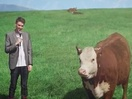New Zealand Jerky Tells Hu-Moo-Rous Jokes to Cows to Promote Their New Beef Jerky