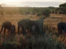 Standard Chartered Tackles Illegal Wildlife Trade in Powerful Banking Ad