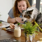 New Cesar Campaign Makes the Weekend Special for Dogs and Their Owners