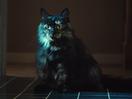 Temptations Puts 'Tasty Human' Cat Treats on the Menu This Halloween