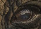 Elephant Looks Poachers in the Eye in This Heartbreaking WWF Film