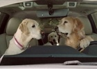 Subaru's Canine Car Owners Return for New Super Cute Spots