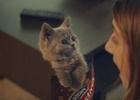 McVitie's Adorably Sweeet Kitties Return in Latest Ad