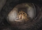 Editor Ruth Hegarty Cuts Emotional Christmas 'Elephant Eye' Spot for WWF UK