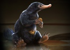 Framestore Adds Some Magic to 'Fantastic Beasts and Where to Find Them'